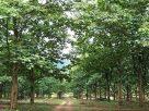 ข่าวดี! รัฐบาลประกาศเปิดให้นำต้นไม้มีค่า มาค้ำประกันเงินกู้จากสถาบันการเงินได้
